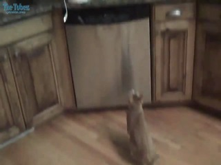 Как отучить кота прыгать на кухонный стол